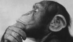 Oameni si maimute