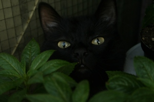 intre oameni si pisici aleg pisicile
